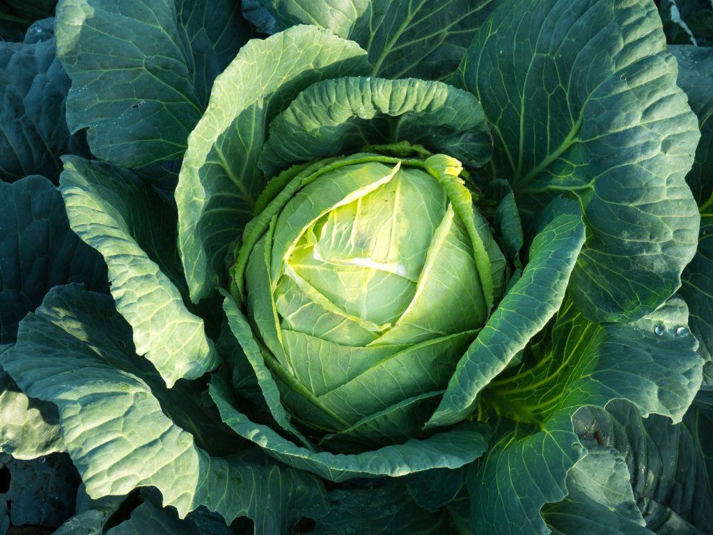 alternatives to Lettuce