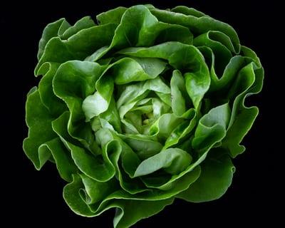 freeze lettuce