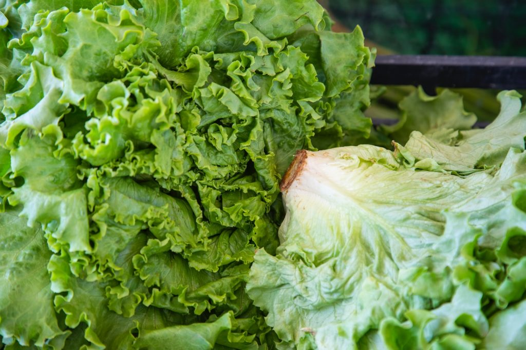 keep lettuce fresh