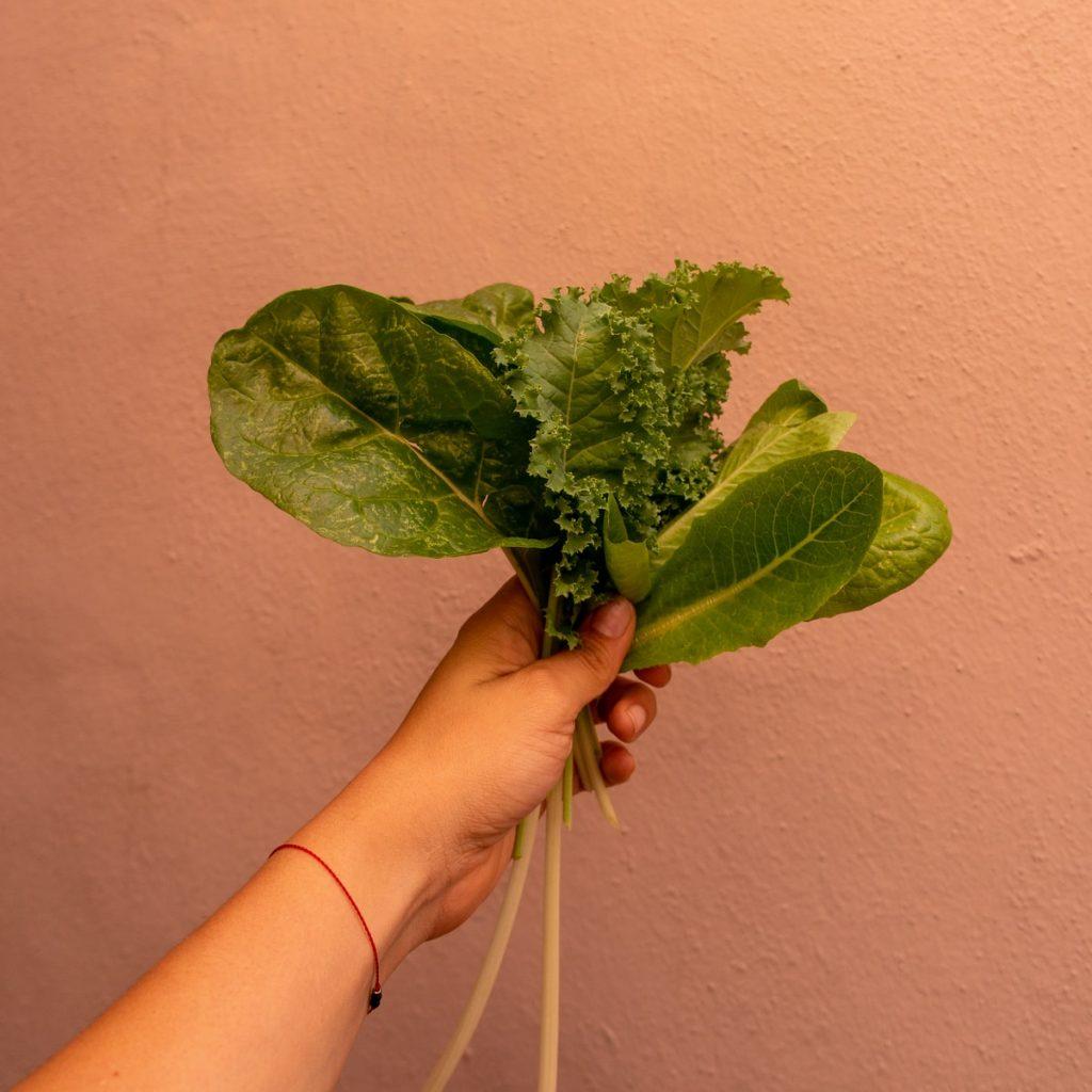 Best Lettuce Varieties for Your Garden